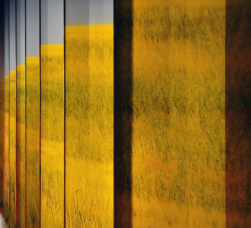 A display wall of panels featuring fields of yellow wheat at the Danish History Museum in Copenhagen, Denmark