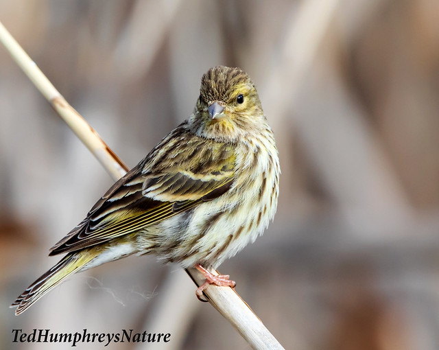 Serin checks around