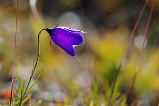 Buona Pasqua a tutti gli amici di Flickr