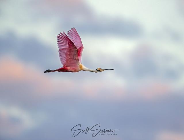 Pink Skies...