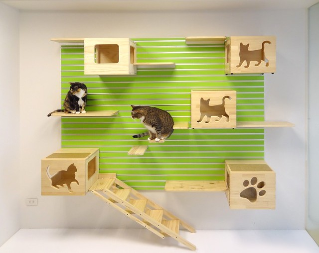 CatWall 1