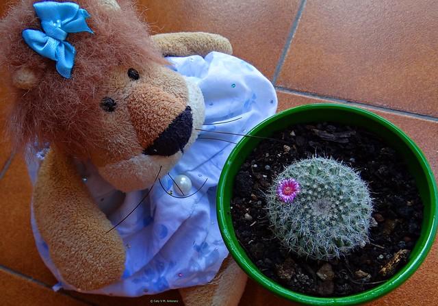Mi pequeñín y su única flor. 29 días de confinamiento.