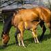 Mutter und Kind mit Pferdeschwanz und Mähne