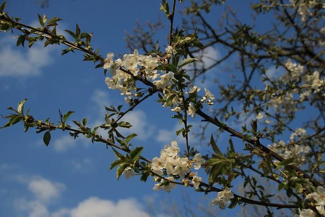 ........der Frühling erwacht