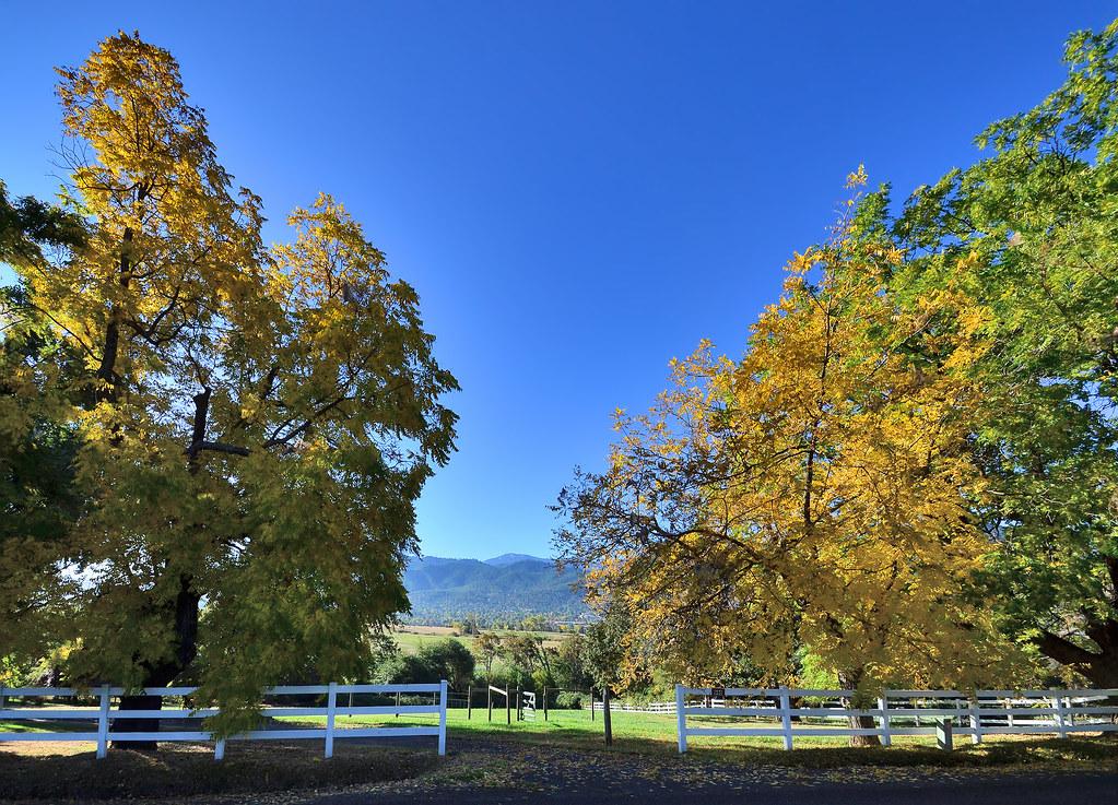 Mt. Ashland framed by autumn
