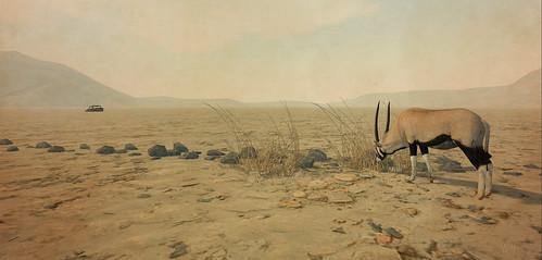 Dans le désert de Namibie...