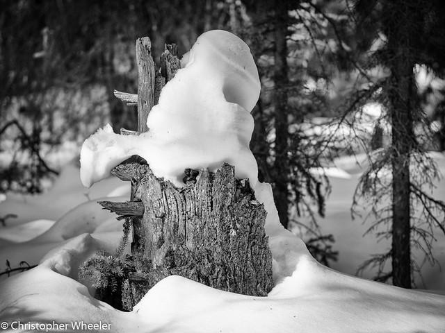 Big Old Stump