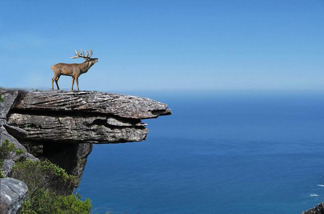 cerf sur rocher
