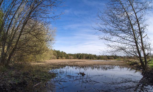 St Mo's Pond