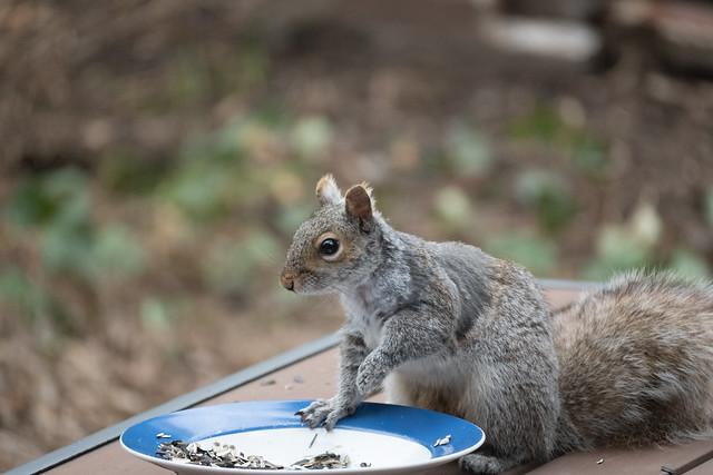 Squirrel grabs a snack