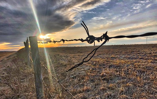 All Along the Fence Line | by cogdogblog