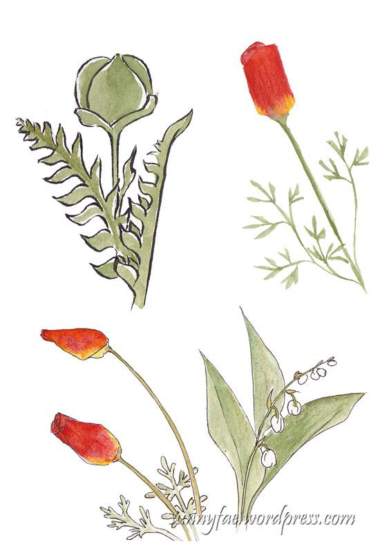 garden plant sketches