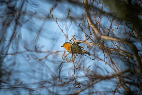 Robin hidden in branches