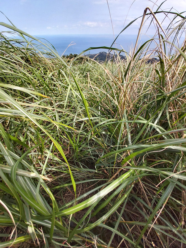 Tall grass makes it difficult to navigate on the trail