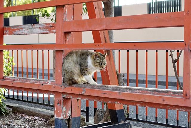 Today's Cat@2020ー04ー13