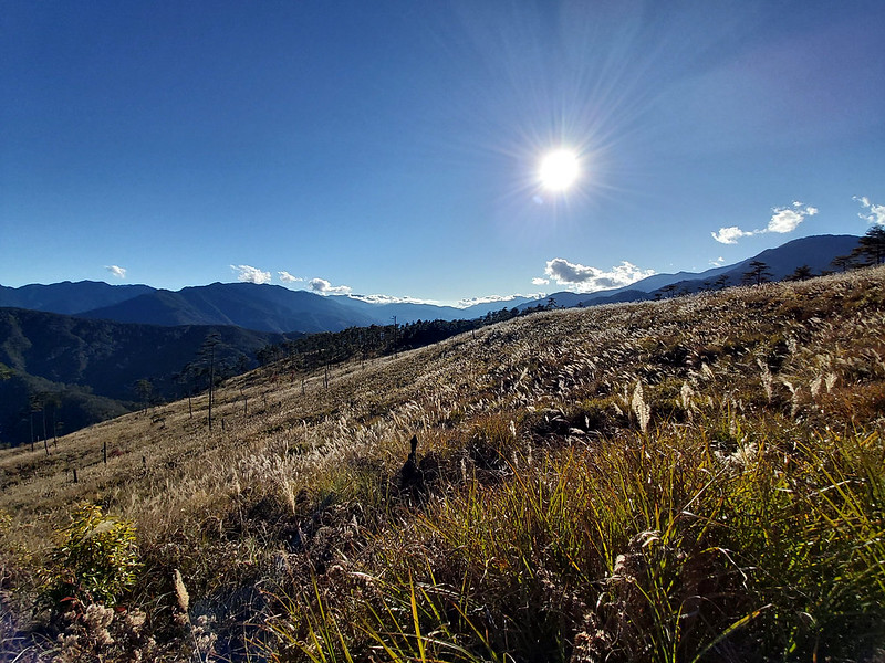 Silver grass on the trail above 2,000 m on ROMA long distance hike