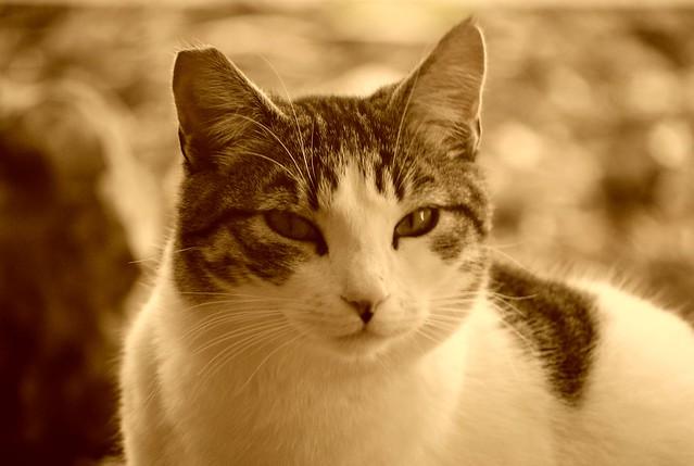 Neighborhood cat - Gata del barrio