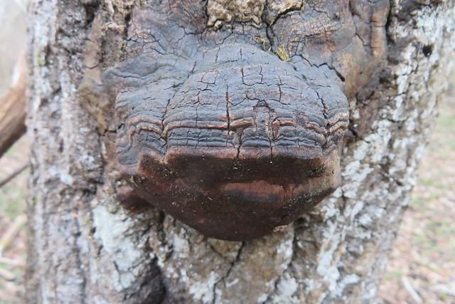 Puu(nina)seen