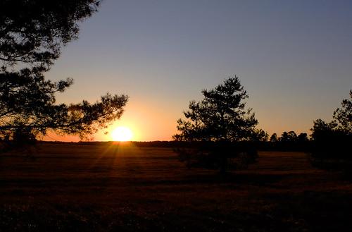 trees sunset germany bayern deutschland bavaria sonnenuntergang bäume panzerwiese milbertshofenamhart light grass spring warm reserve pines kiefern frühling naturschutzgebiet truppenübungsplatz naur ©allrightsreserved nature munich münchen