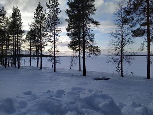 posio livojärvi lumi snow puut trees
