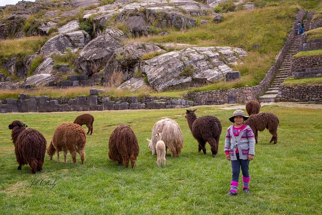 Armchair Traveling - Sacsayhuamán, Cusco, Peru - Alpaca Butts