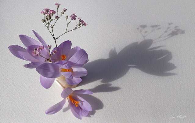 Delicate SHADOW.....Crazy Tuesday !