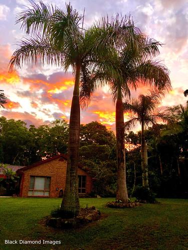 raintreesnativeandrainforestgardens diamondbeach midnorthcoast nsw australia lawn house home greatlakesnsw manningvalley hallidayspoint raintrees sunset