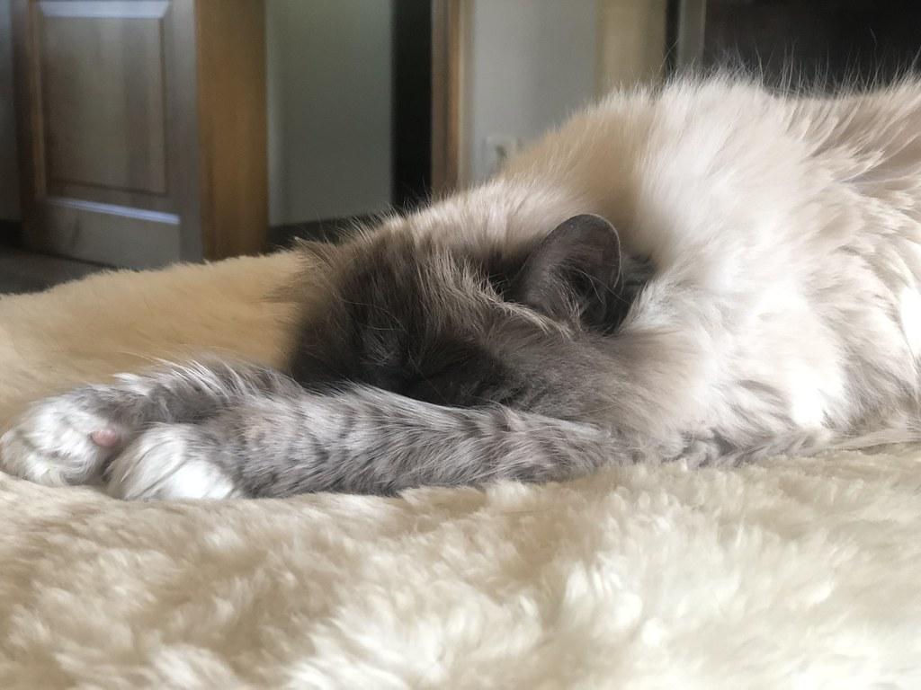 Notre princesse Luna au repas après une nuit de sommeil 😴😴😴