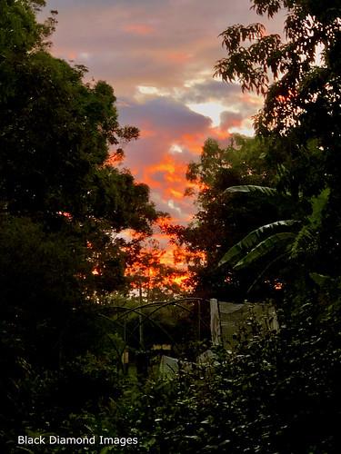 raintreesnativeandrainforestgardens diamondbeach midnorthcoast nsw australia greatlakesnsw manningvalley hallidayspoint raintrees sunset