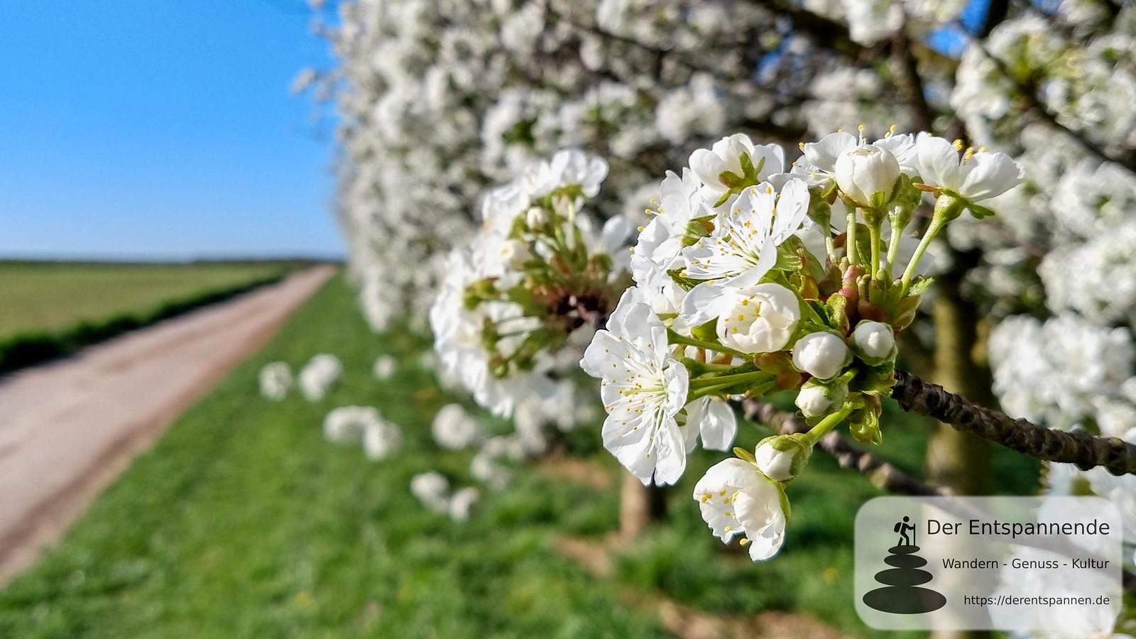 Obstplantage bei Zornheim