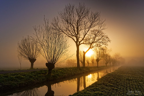 sunrise goldenhour tree rural road water reflection field grass cloud sky purmerland waterland netherlands landscape nikon d7500 misty foggy mystical aoi elitegalleryaoi bestcapturesaoi