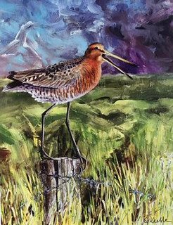 Godwit by Ed Keeble from @timjwakefield