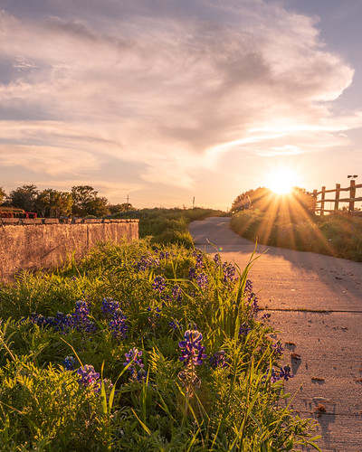 bluebonnets sunset flowermound texas wildflowers naturephotography landscapephotography