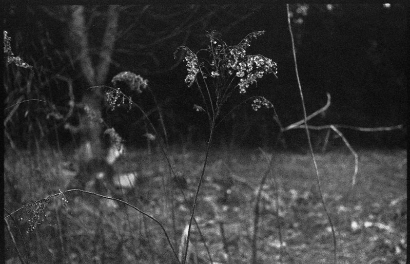 dried wildflowers, stems and branches, yard, Asheville, NC, FED 4, exterior, abandoned mill, brick, stone, window, graffiti, River District, Asheville, NC, FED 4, Industar 61, Bergger Pancro 400, HC-110 developer, late March 2020