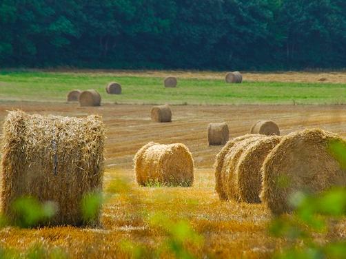 fieno-campo-agricoltura