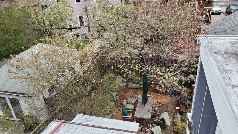The Backyard viewed from the Aerie, April 2020