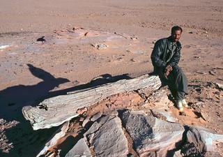 Árboles petrificados - Al Fau (Libia) - 05