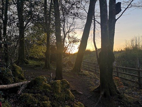 sunset twilight trees light moss batbox fence forest path isolationwalk eveninglight