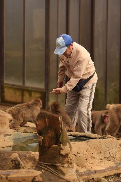 高尾山さる園 - Mt. Takao Monkey Park