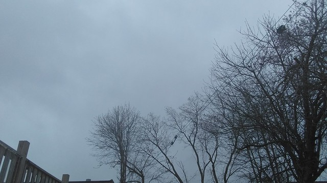 Grey evening #Toronto #dovercourtvillage #grey #sky #evening #backyard