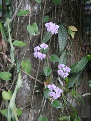 orchids near puddle pool