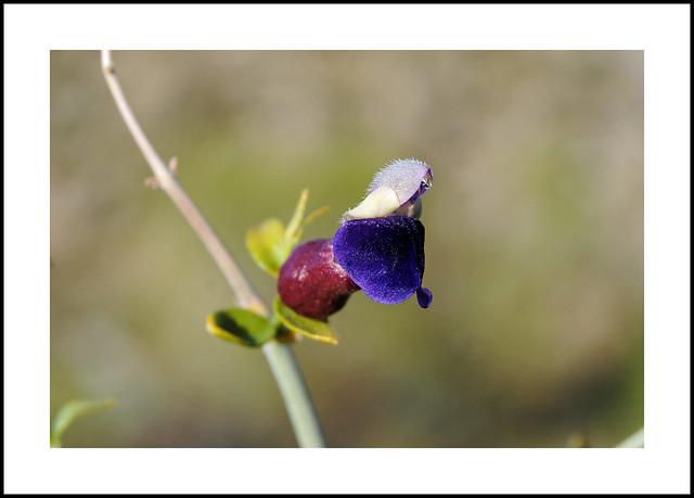 Nine Mile Canyon Wildflowers