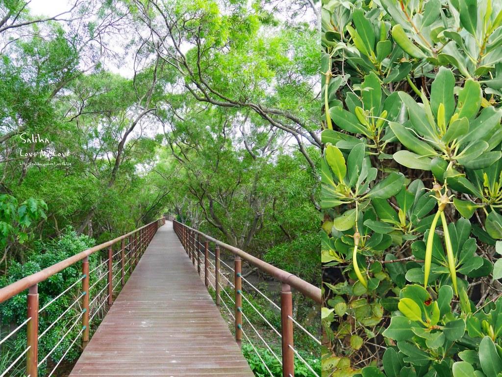 新北淡水老街附近景點一日遊好玩親子踏青好拍散步好走推薦紅樹林水筆仔 (2)