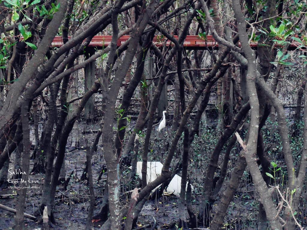 淡水紅樹林站一日遊景點踏青推薦淡海輕軌紅樹林生態步道好走輕鬆唯美 (10)