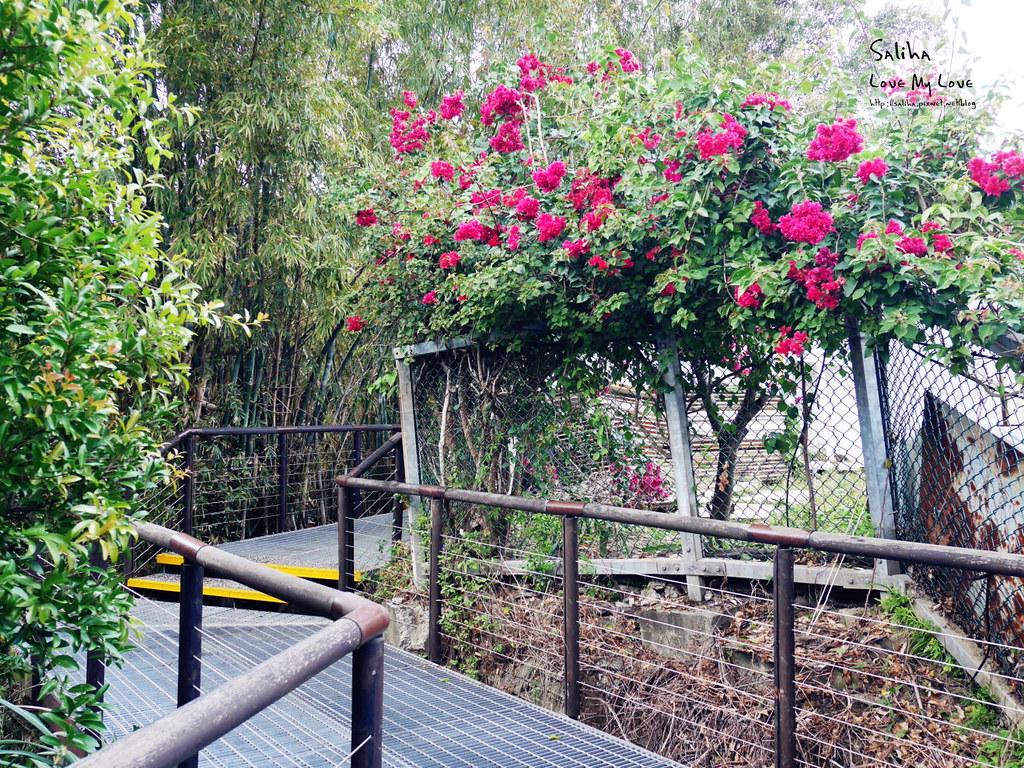 淡水紅樹林站一日遊景點踏青推薦淡海輕軌紅樹林生態步道好走輕鬆唯美 (9)