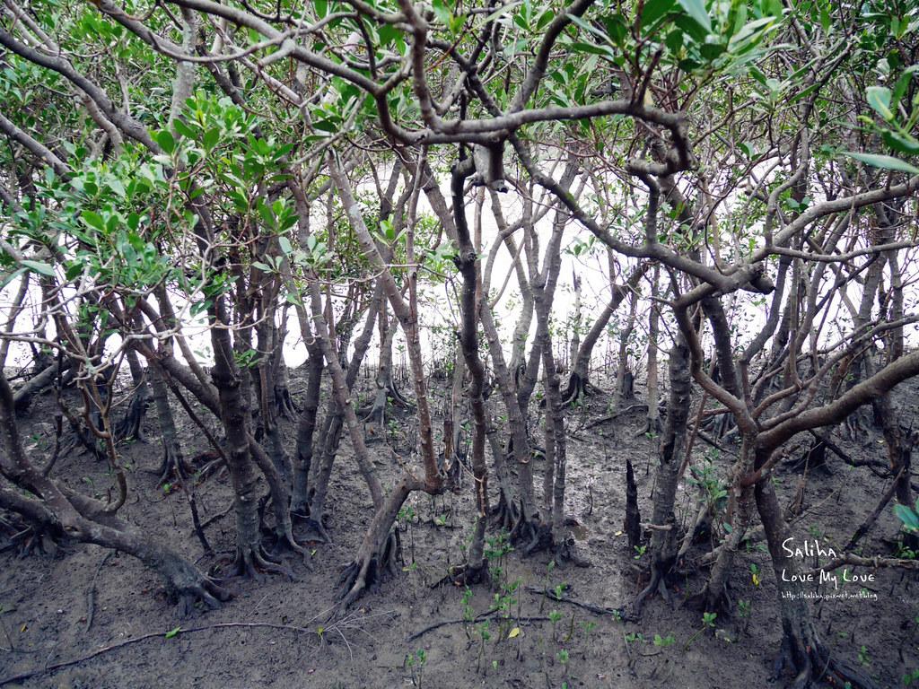 淡水一日遊輕軌附近景點推薦紅樹林生態步道淡水站老街秘境 (6)