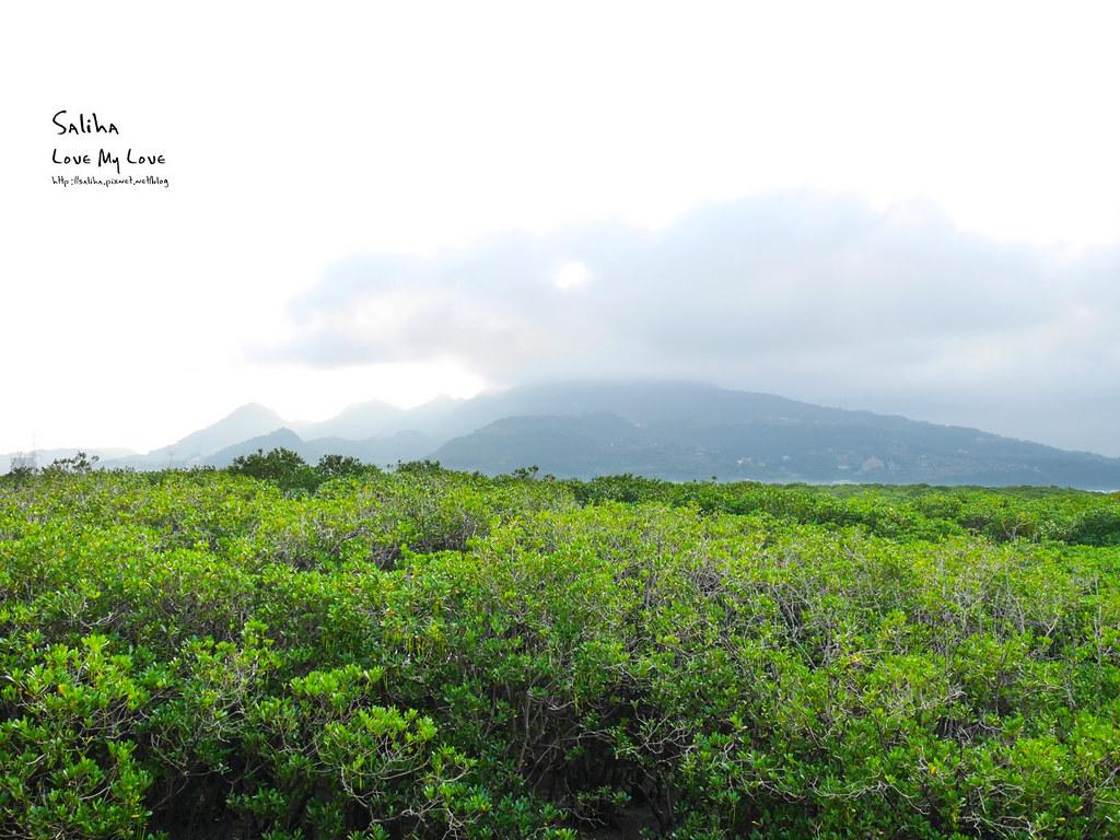台北一日遊景點私房秘境推薦淡水紅樹林保留區 (1)