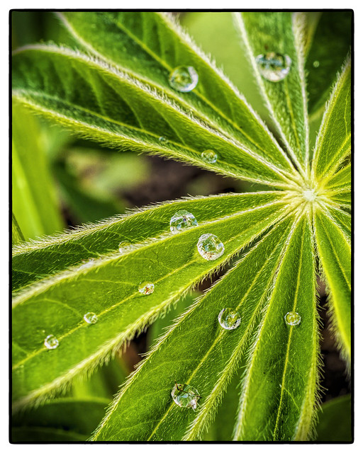 Last Drops of the Morning Dew