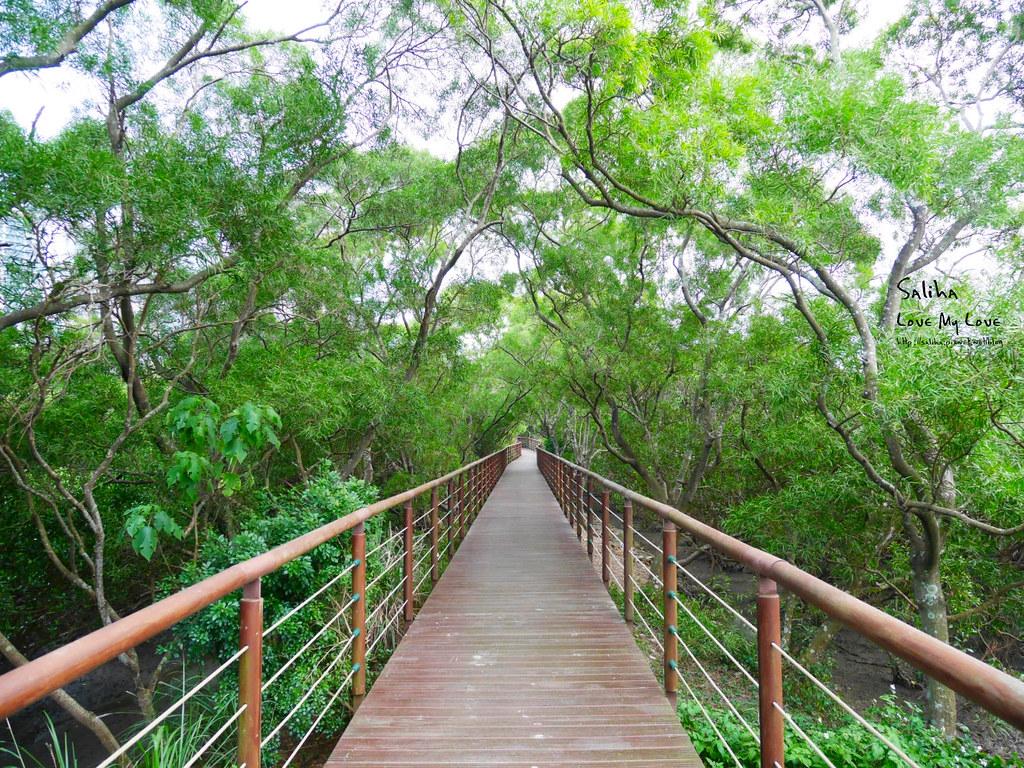 新北淡水老街附近景點一日遊好玩親子踏青好拍散步好走推薦紅樹林水筆仔 (1)