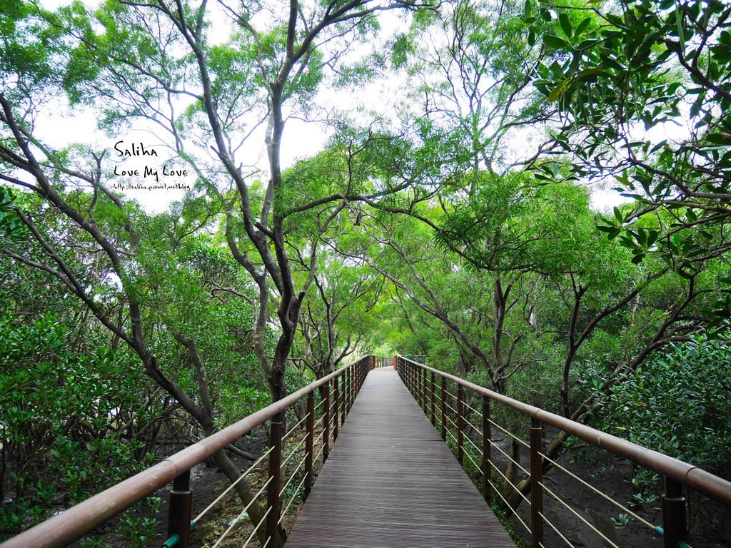 淡水紅樹林站一日遊景點踏青推薦淡海輕軌紅樹林生態步道好走輕鬆唯美 (11)